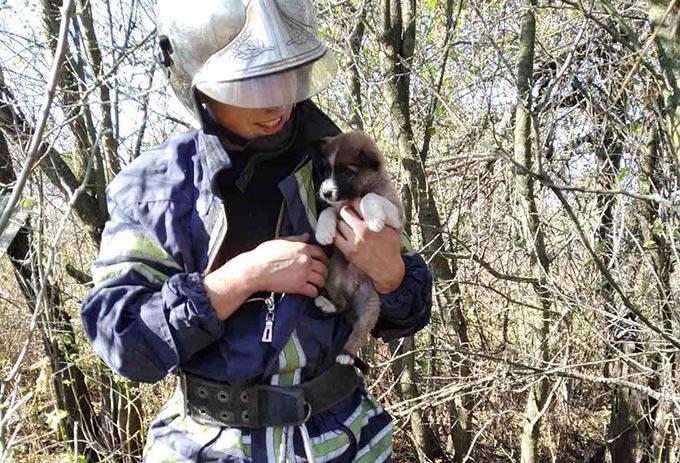 У Радомишльському районі рятувальники дістали з криниці цуценя