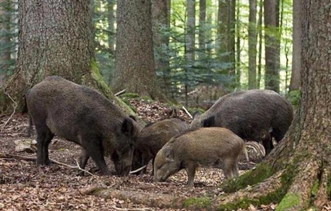 Громадська організація отримає на 18 років майже 7 тис.га мисливських угідь у Радомишльському районні