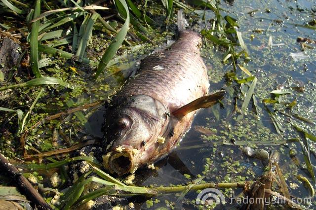 Екологічна катастрофа в Радомишлі