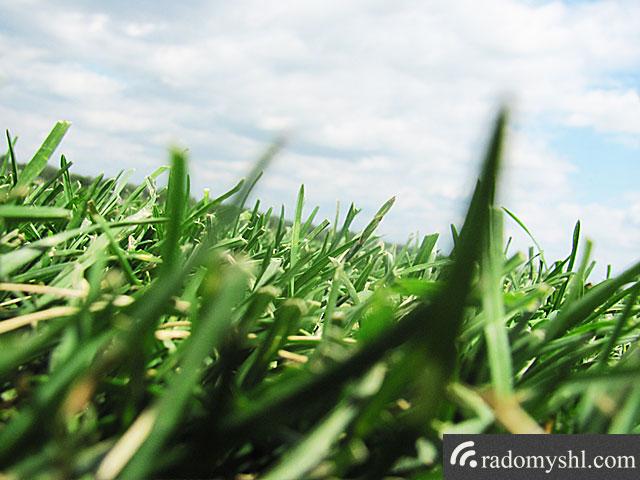 Високоякісний газон тепер вирощуватимуть біля Забілоччя