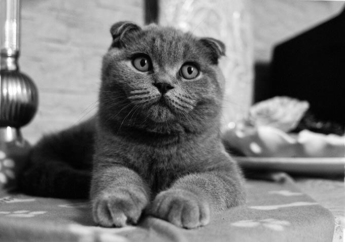 На Радомишльщині мисливець жорстоко вбив домашнього кота: бив об паркан, а потім тварину розірвали розлючені пси.