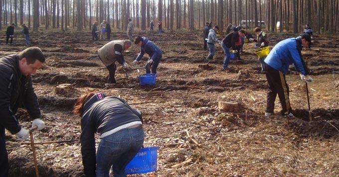 Державні службовці Радомишльського району прийняли участь в Акції «Майбутнє лісу в твоїх руках»