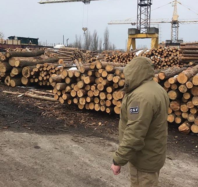 Керівники держлісгоспу під виглядом санітараних рубок крали ліс і торгували ним. + ФОТО