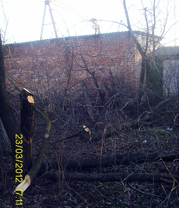 Електробабуїни в Радомишлі