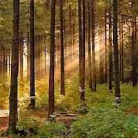 Ліси в Житомирській області інспектуватимуть міжнародні аудитори