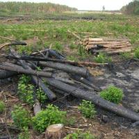 Екологи закликають Генеральну прокуратуру терміново провести розслідування стосовно ситуації на Радомишльщині